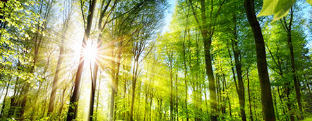 WKS-Gruppe-Druckholding-News-Umwelt-Energiemanagement